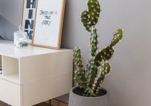 Kaktus in einem grauen Topf